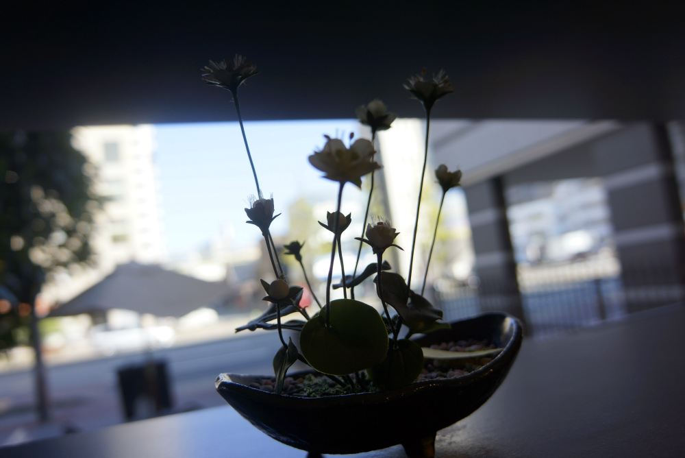 田添さん粘土の花
